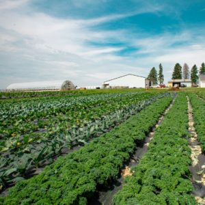 Pine Creek Farms growing produce on their organic farm in Plainview, Minnesota