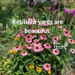 Resilient yards are beautiful. Photo of landscaping.